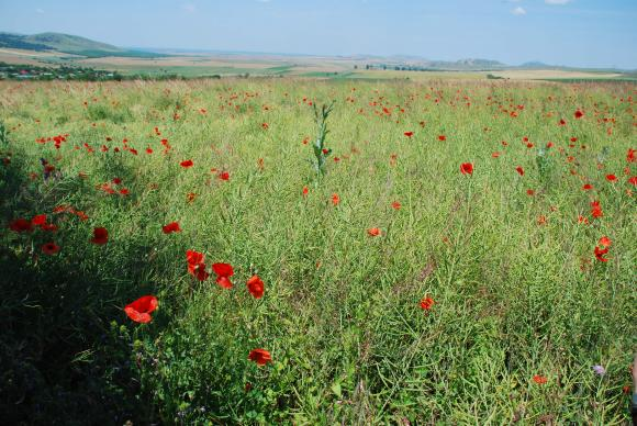 Европейска платформа в помощ на биопроизводителите