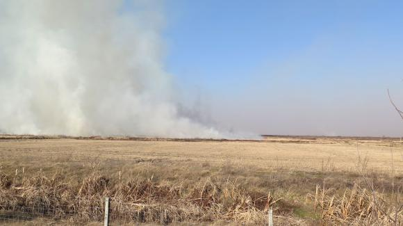 Пожар изпепели още 40 декара с пшеница
