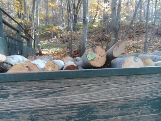 При нощна акция в Земенско е иззет превоз с незаконно добити дърва