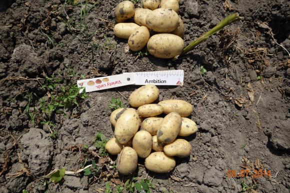 Украински производител на картофи не вярва на статистиката