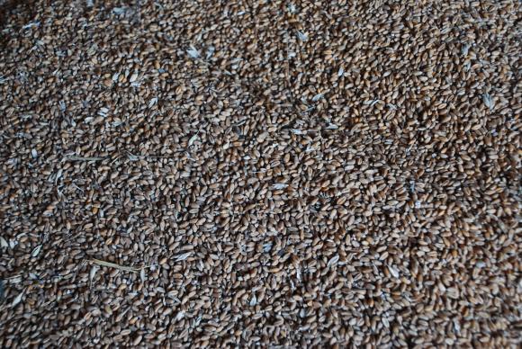 Бум в износа на ечемик от началото на юли