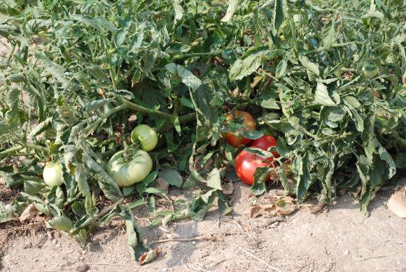 Сключвате еднодневни договори в земеделието – ето и детайлите!