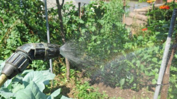 Подхранване на краставиците с борна киселина