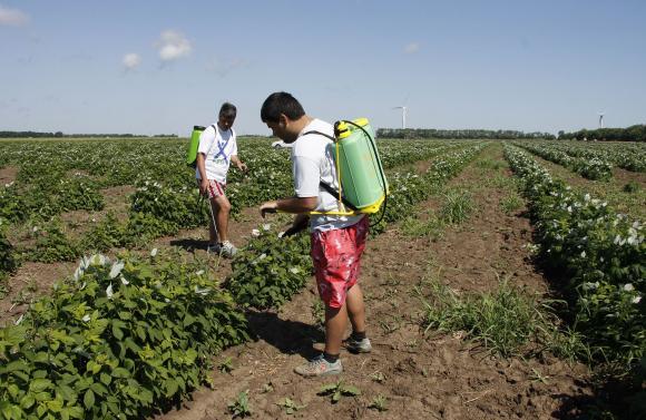 Едва половината от семейните ферми разчитат младите да поемат бизнеса