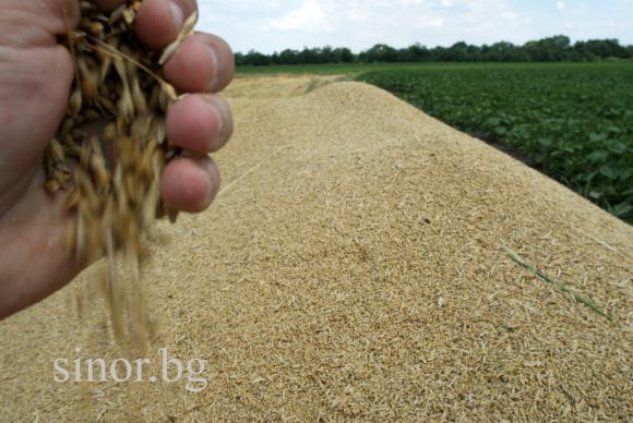 Ожънати са 4,5 милиона пшеница от 97 на сто от площите
