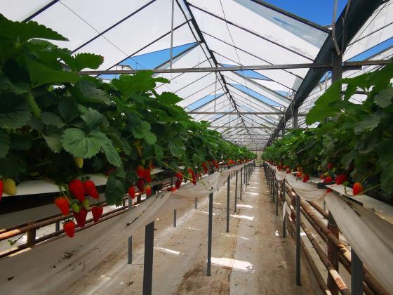 Производители на оранжерийни зеленчуци са усвоили 400 хил. лева от заделените 5 милиона по de minimis