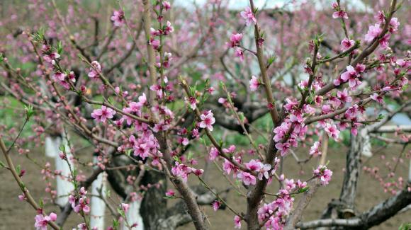 Приемът по de minimis за плодове, зеленчуци, роза и лозя започва от днес