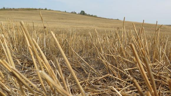 Костадинов: Убийствените ренти в Добруджа ще закопаят и фермерите с държавно наета земя