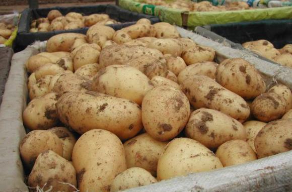 За обвързаната подкрепа се кандидатства през декември т.г. за всички зеленчуци - без картофи, лук и чесън