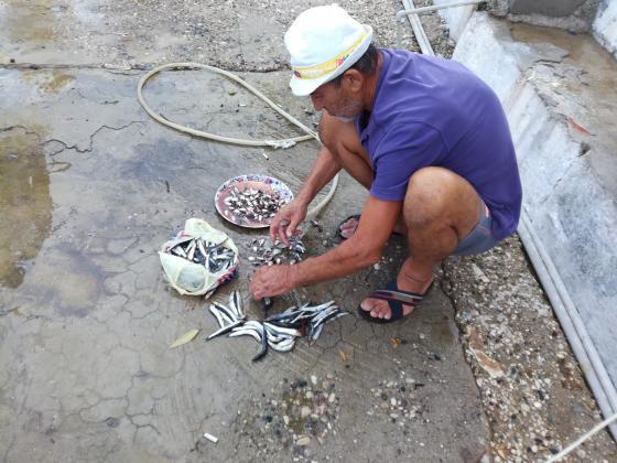 Климатичната криза заплашва поминъка на рибарите, алармират природозащитници