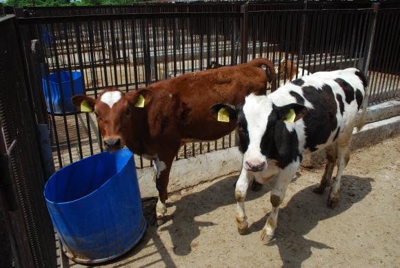 Точно преди празниците са преведени 22 млн. лева по de minimis на животновъдите
