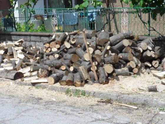 Откриха над 200 кубика незаконни дърва за огрев само в едно село в Еленско