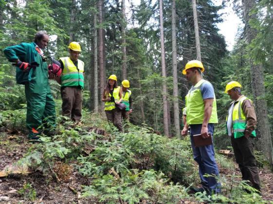 Мащабни дейности за опазване на горите от климатичните промени