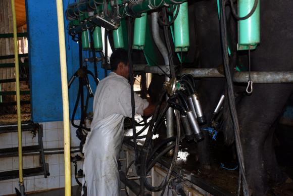 Лукашенко влезе в тройката на млекопроизводителите в Русия и Беларус