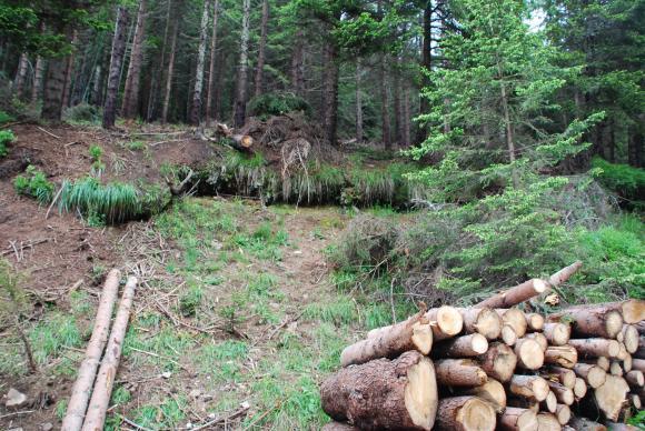 Откриха 62 незаконно отсечени дървета в Смолянско