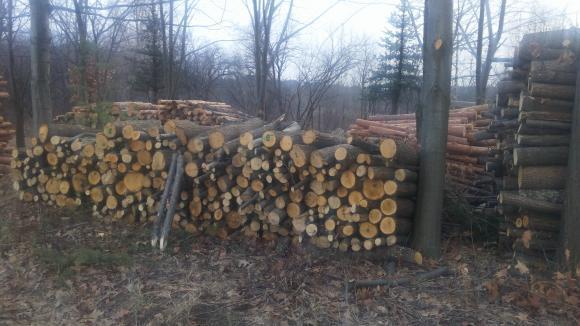 Иззеха 19 кубика незаконно добита дървесина от частен дом в Разградско