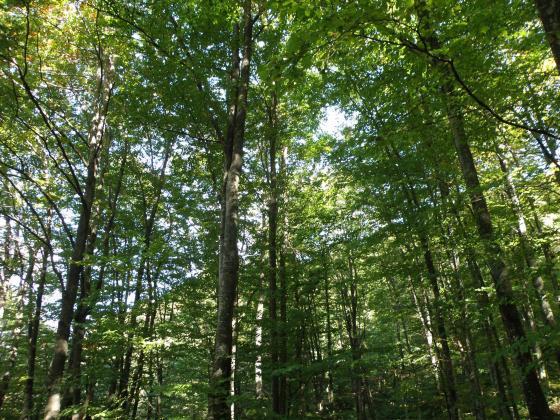Влезна в сила изменението на Наредба от 2011 г. за сечите в горите