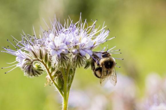 Интересен семинар за пчеларите на 9 октомври във Враца