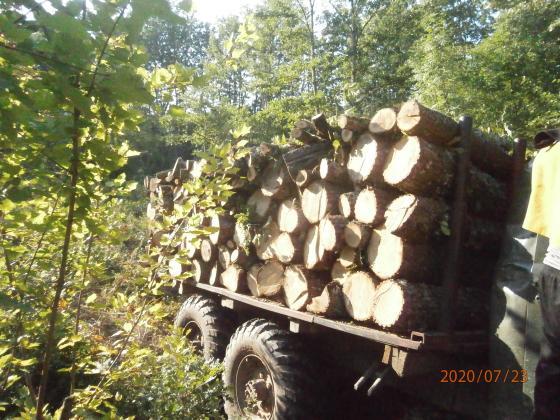 Откриха незаконно отсечени 260 дървета от цер и явор в Русенско