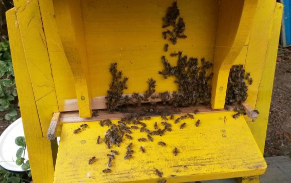 Само агенцията по храните ще разрешава регистрацията на пчеларите