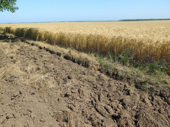 Реколтата и добивите от пшеница в Румъния намаляха с над 40 на сто