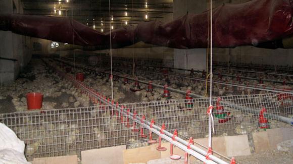 Жегата умъртви милион пилета в Бразилия