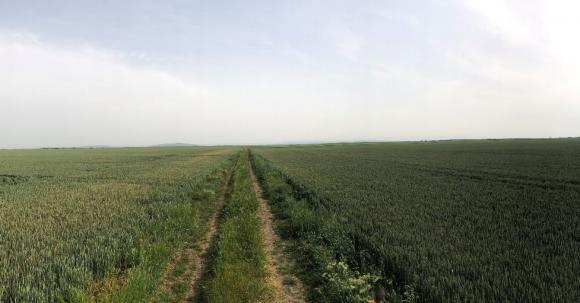 Как да постигнем максимални резултати при отглеждането на пшеница?