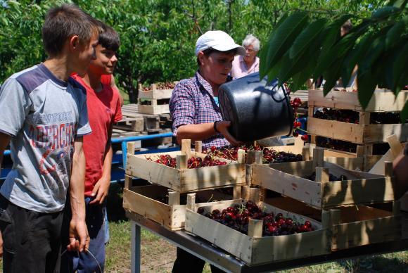 Еднодневните договори в земеделието масово прикриват нелегалния труд, сигнализират синдикалисти