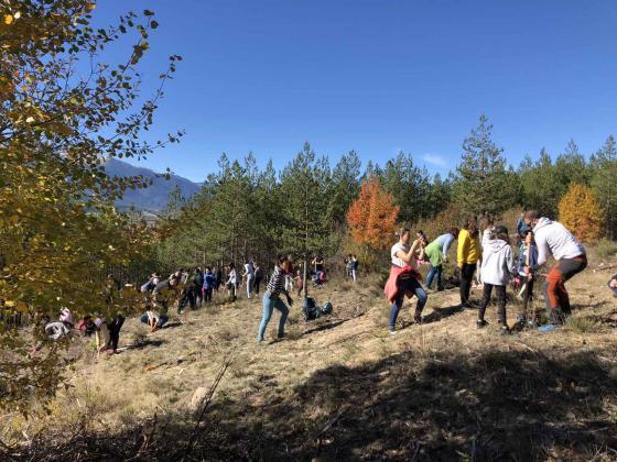 Доброволци засадиха хиляда медоносни дръвчета в Пирин