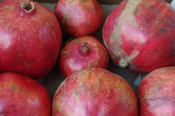 Само през октомври е спрян внос на 512 тона плодове и зеленчуци с пестициди от трети страни