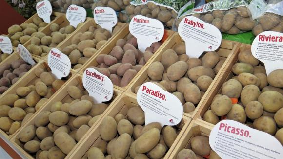 Украинци вдигнаха тройно добивите от картофи с капково напояване