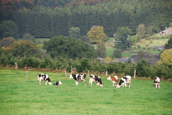 Farm Europe се обяви против намаляването с 20 процента на торовете и с 50 процента на пестицидите в новата ОСП