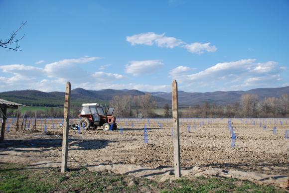 И още за есенно обеззаразяване и подхранване на почвата