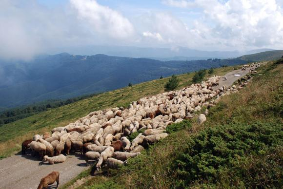 Субсидиите за мярка 10 се режат, ако пасищата от НАТУРА са в национални паркове