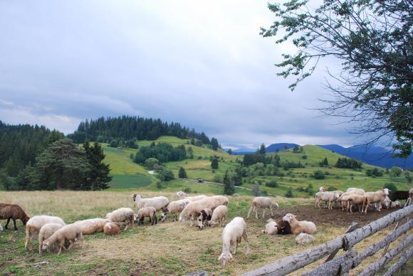 Да има ли поземлен данък - въпросът с най-много неизвестни за фермерите?