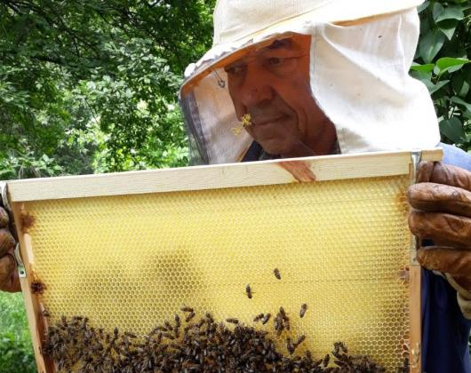 Отпада регистрацията на пчелини в кметствата