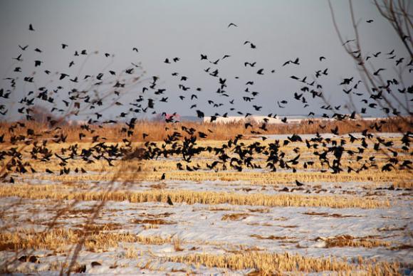 Европейски анализатори отчитат висока уязвимост на студ на родната пшеница