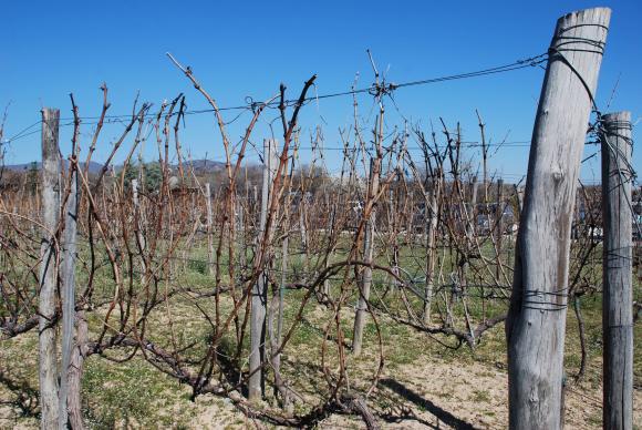 През януари ще се приемат документи за кредитиране на закупуване на торове за винени лозя
