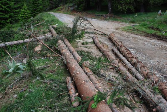 В Югозападна България са прокарани близо 50 километра горски пътища