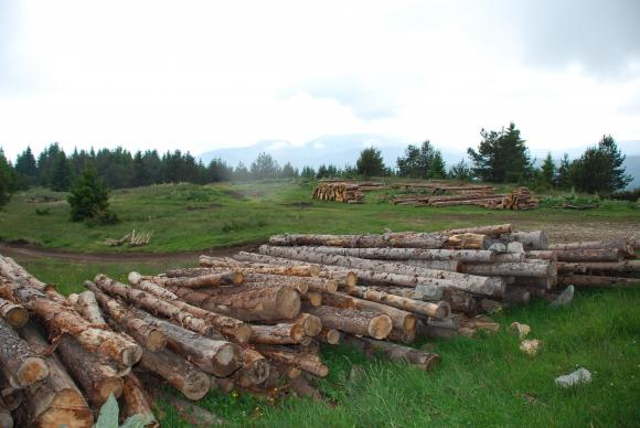 Малко над 1 милион кубически метра дървесина са добити в ЮЗДП, спад заради кризата