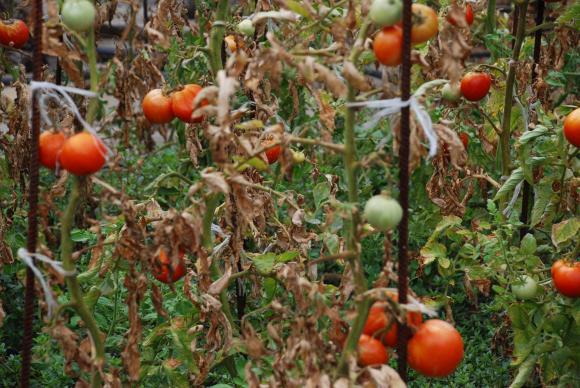 НСИ отчита 22,8% срив в произведената през 2020 година селскостопанска продукция