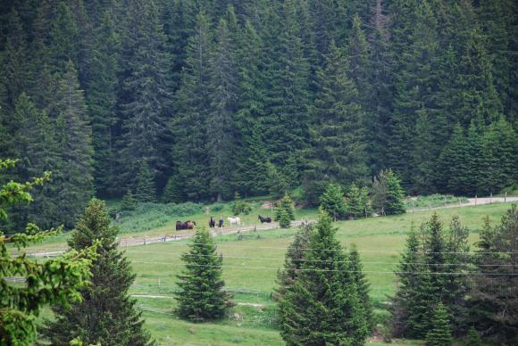 Дават се субсидии за разширяване на старите гори