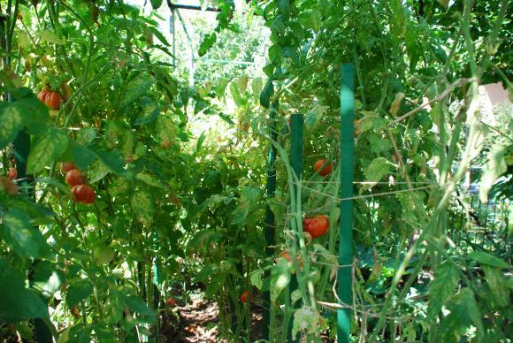 През следващия период обвързаната подкрепа при зеленчуците ще се дава за напоявани площи