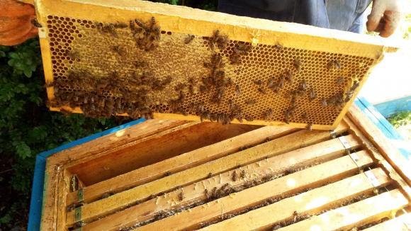 Пчеларската програма отпуска 54 лева за покупка на нов кошери