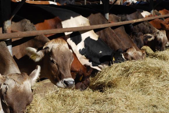 Максимум до 200 метра от GPS-координатите на фермата ще се вземат проби за суровото мляко