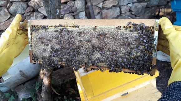 Комплекс от мерки за пчеларите са заложени в Стратегическия план за новата ОСП