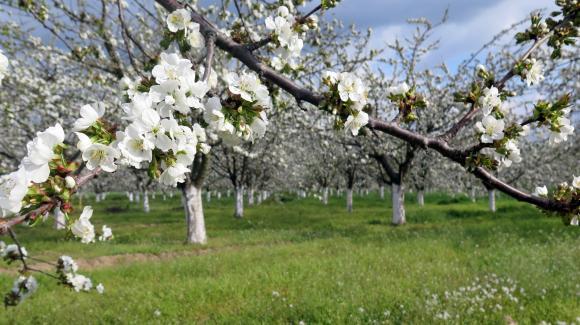 Фермери питат: На каква база е изчислен бъдещият Стандартен производствен обем (СПО) на стопанствата