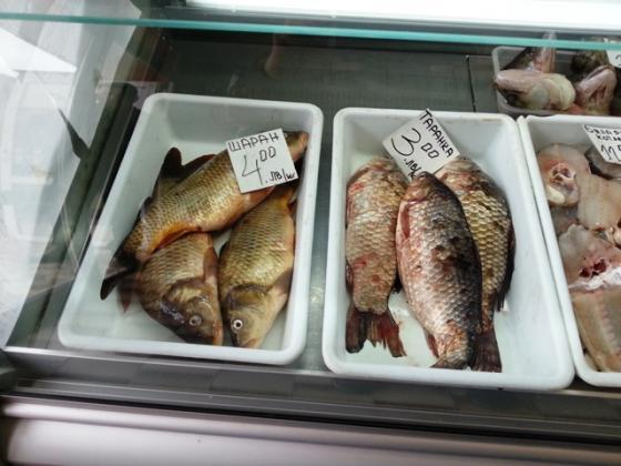 Откриха над 100 килограма риба за документи в търговски обект в Русе