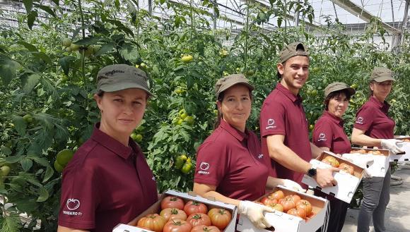 Розовият домат, който спечели доверието на българските производители