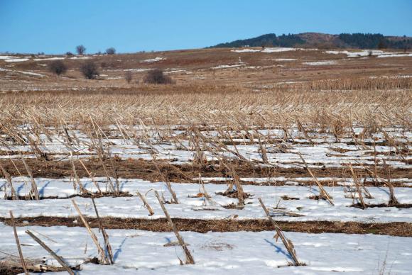 Студовете в Украйна пощадиха есенниците за сметка на овошките